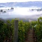 上質なカリフォルニアワインに欠かせない「霧」という自然現象