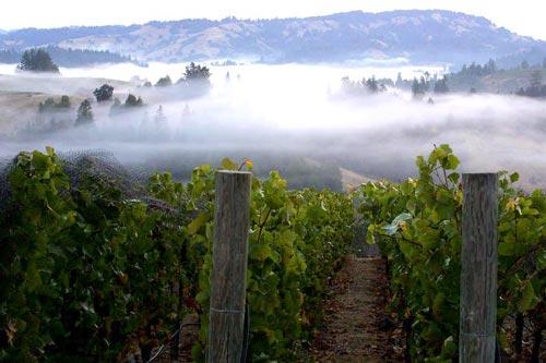 カリフォルニアワインに欠かせない霧