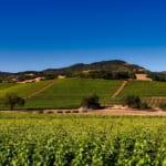 ワインの品質を決める重要な役割テロワールとは