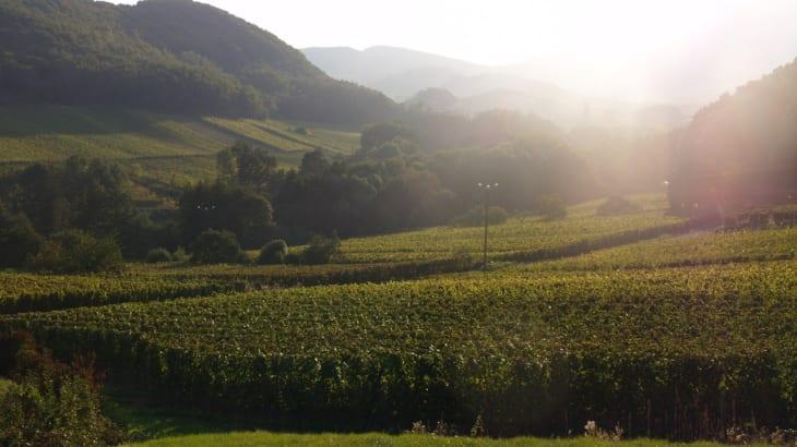 モレ・サン・ドニ村から造られるワイン