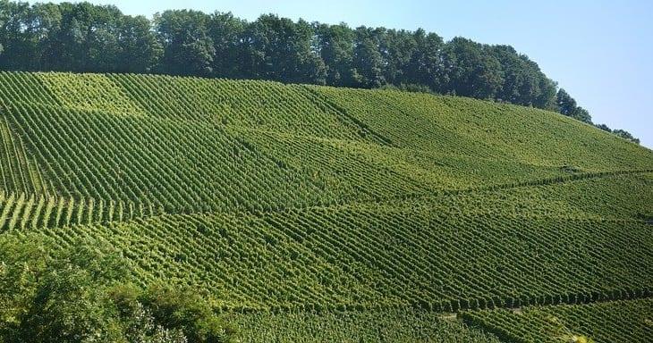 バラエティ豊かな赤ワインが造られているドイツのヴュルテンベルク地方とは