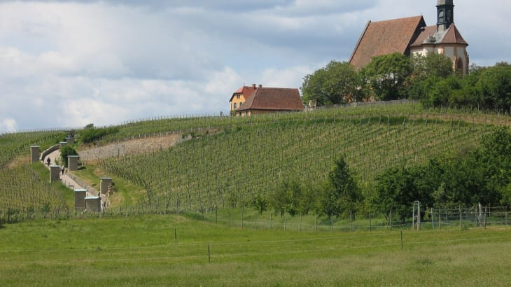 フランケン地方で造られるワインの味わいと特徴