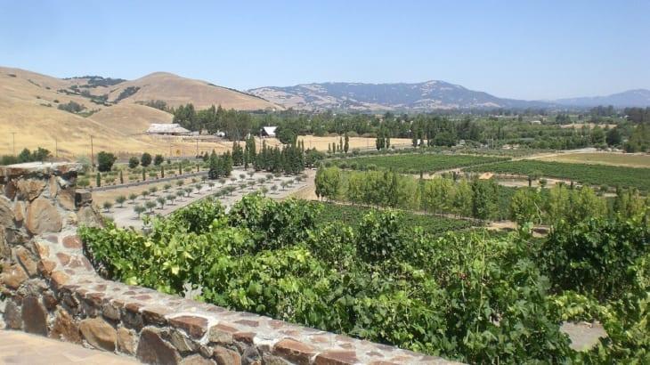 ソノマのワインの特徴