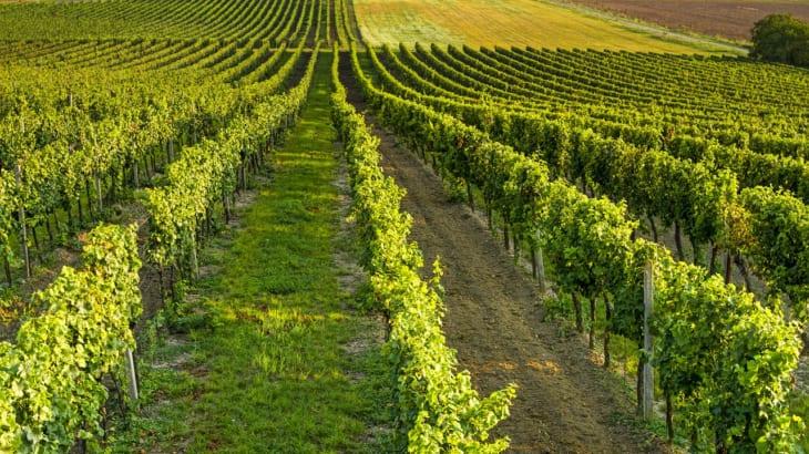 チリワインの魅力とは?ソムリエ厳選のおすすめ5選もご紹介